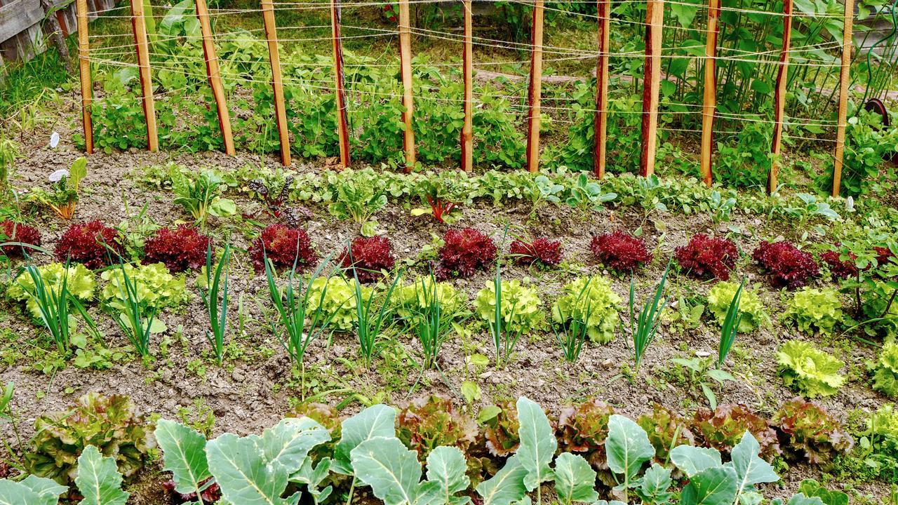 Natur im Garten (7/10) - Ein idyllischer Bauerngarten in ...