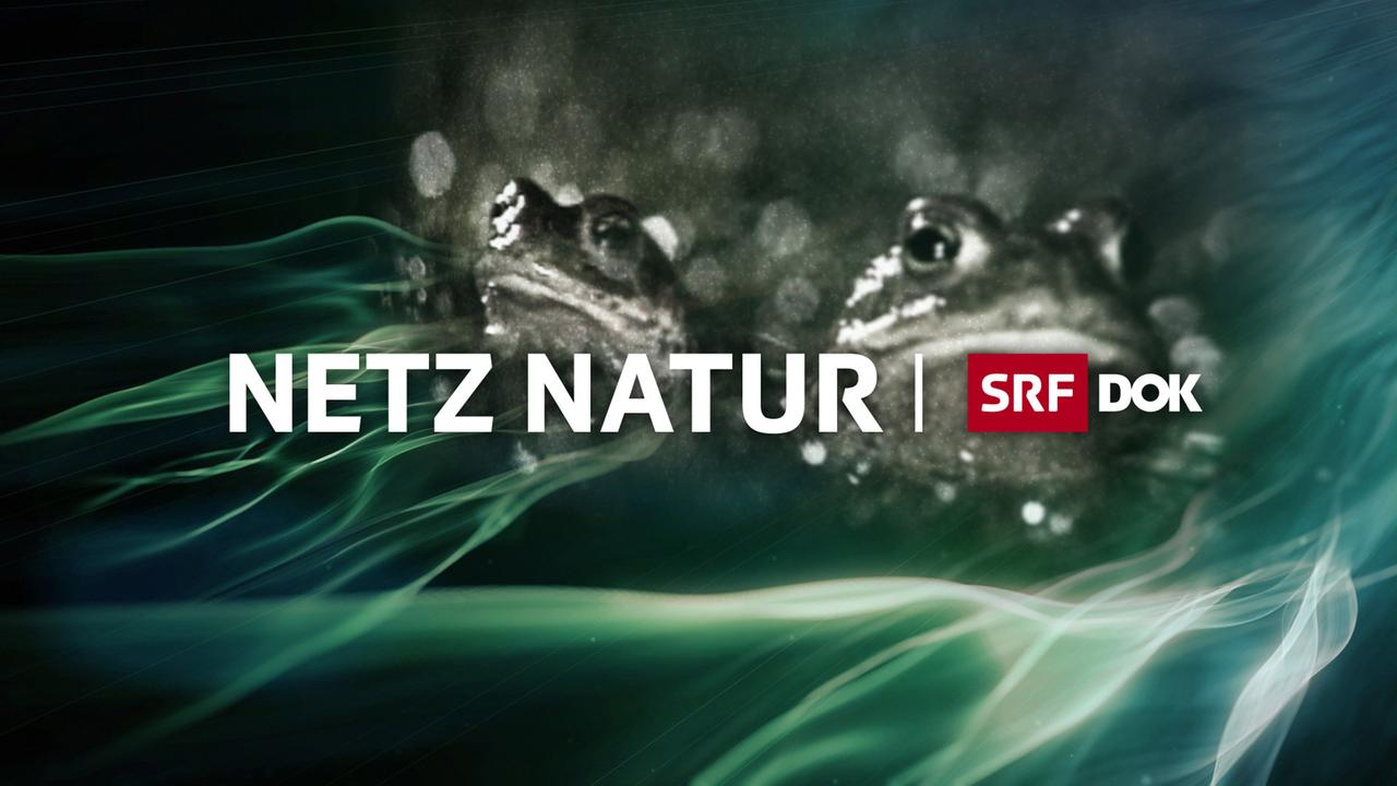 Netz Natur 3sat